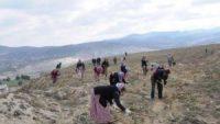Maden Sahaları Ağaçlandırılıyor